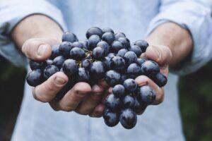 Obst online bestellen – der neue Trend